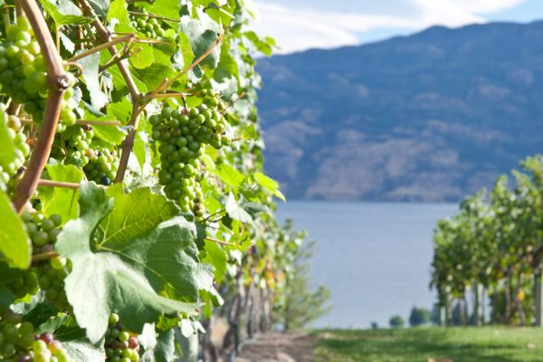 Osoyoos and Oliver Wine Tour Full Day